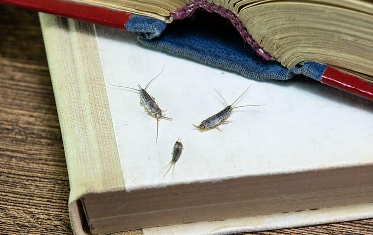 silverfish in spring hill home