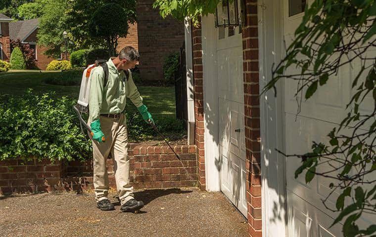 technician pest proofing a home