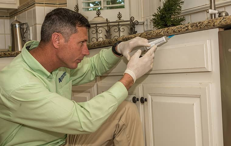 all american tech providing interior home pest control services in berry hill tennessee