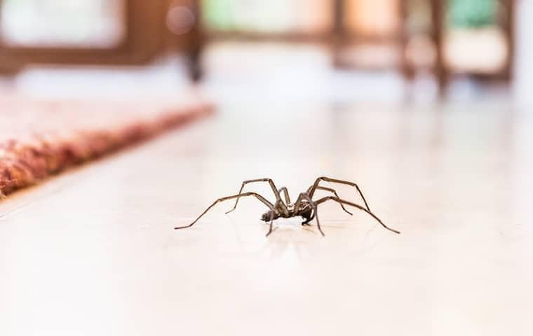 a spider on the floor of an east tennessee home
