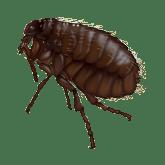 flea in hendersonville tn