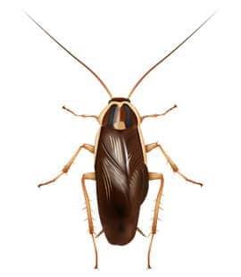 german cockroaches in nashville tn