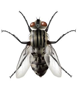 house fly found in nashville tn