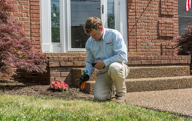 all american tech providing termite control services in east nashville tennessee