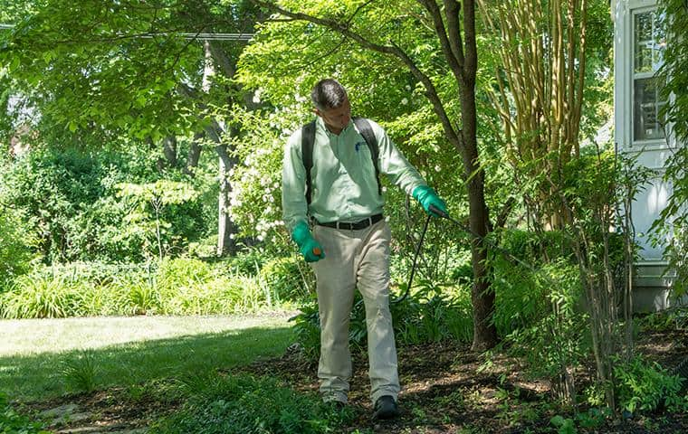 all-american termite control specialist treating yard for stinging and biting insects