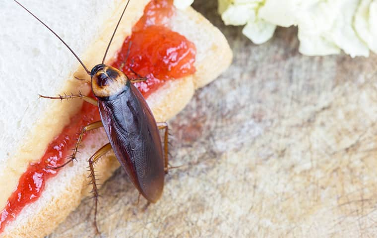 a cockroach crawling on a sandwich inside of a kitchen in suffolk virginia