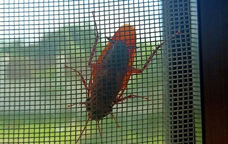 a cockroach crawling on a window screen