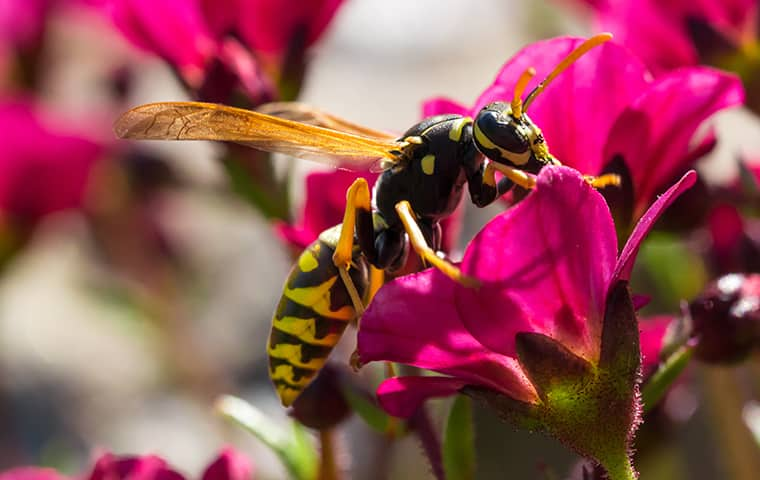a wasp on a flower petal in oracoke north carolina