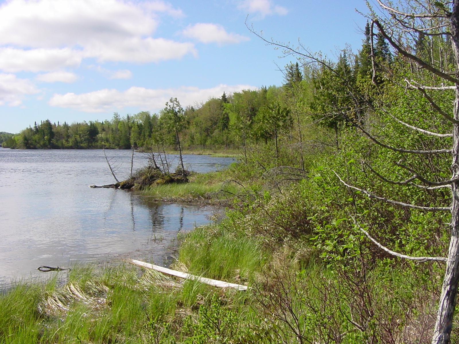 Hatchery Brook Preserve*