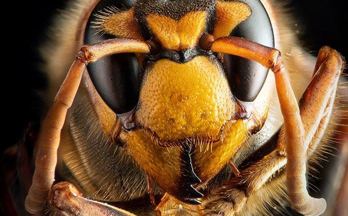 stinging insect in senoia georgia