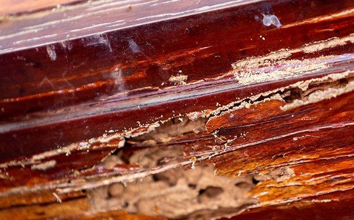 damaged wood in fayetteville georgia