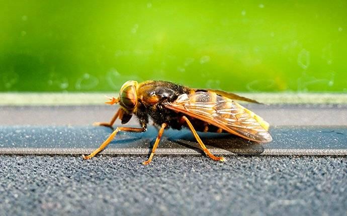 hornet on a window