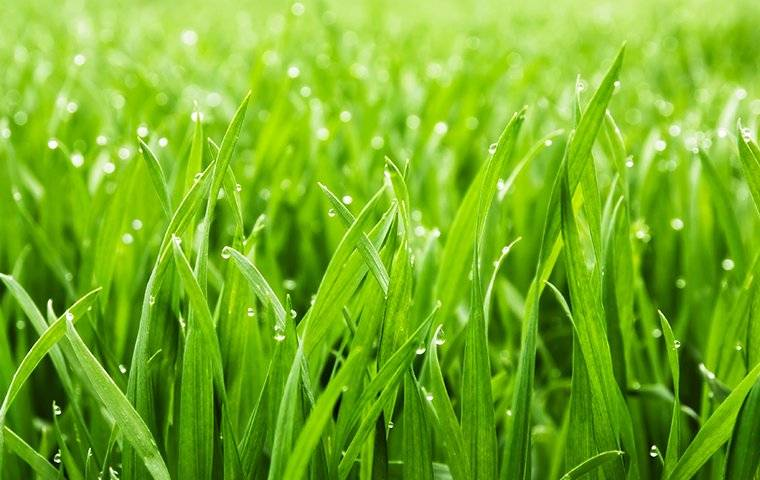 beautiful grass in reno
